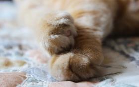 Картинка кошка, лапки, лапы
