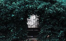 Обои листья, дверь, калитка