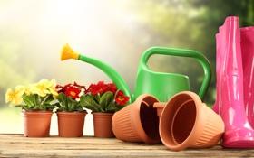 Картинка красная, горшки, желтая, примула, primrose, садовый инвентарь, садовые цветочки