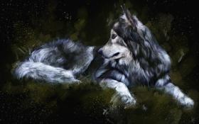 Картинка темный фон, волк, живопись