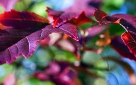 Обои листья, обои, макро