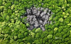 Картинка лес, деревья, Австралия, национальнsq парк Порт-Дуглас, место попадания молнии