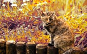 Картинка кот, взгляд, цветы, злой