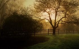 Картинка трава, природа, дерево, дымка, кусты