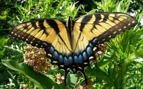 Обои пятна, парусник, полоски, бабочка, цветы
