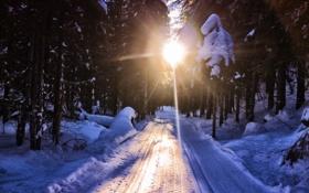 Обои зима, дорога, лес