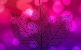 Обои прозрачность, природа, лист, цвет, силуэт