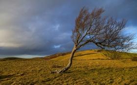 Картинка осень, трава, небо, холмы, тучи, дерево