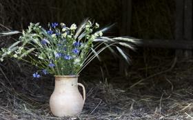 Обои ромашки, сено, ваза, колосья, полевые цветы, васильки