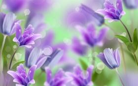 Обои цветы, колокольчики, flowers, bells