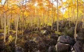 Обои осень, деревья, камни, склон, осина