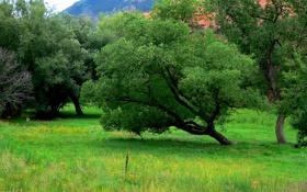Обои трава, деревья, горы, сша, Colorado Springs, Red Rock Canyon