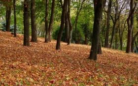 Картинка Природа, Осень, Деревья, Лес, Листья, Парк, Пейзаж