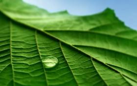 Картинка листья, капли, фотографии, green macro, обои для рабочего стола, макро