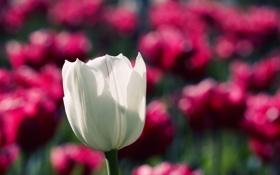 Обои цветы, природа, сад, макро фотографии, обои с цветами