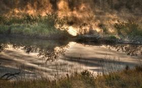 Картинка природа, осень, кусты, озеро, туман