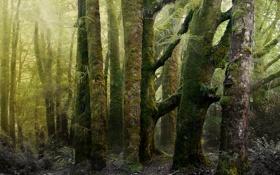 Обои природа, мох, лес, старый