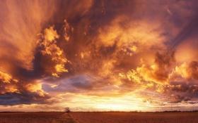 Картинка поле, небо, облака, закат
