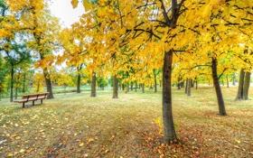 Картинка осень, трава, листья, деревья, парк, скамья
