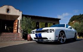 Обои Dodge, SRT8, Challenger, додж, 2011, челленджер