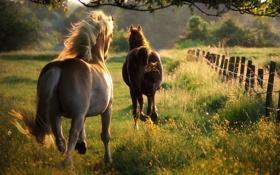 Картинка лето, свобода, природа, лошади