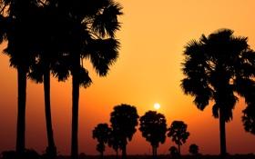 Обои небо, фото, вид, вечер, деревья, природа, пейзажи