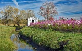 Обои небо, облака, деревья, цветы, отражение, поток, зеркало
