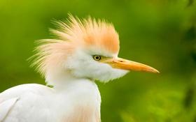 Обои глаз, птица, цвет, перья, клюв