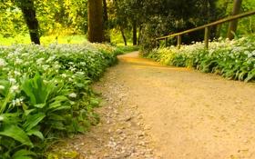 Обои way, green, summer, day, flowers, path