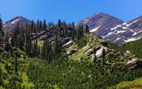 Обои лес, горы, лето