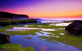 Обои закат, мох, пейзаж, море, камни
