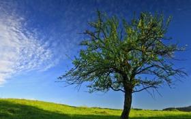 Обои небо, дерево, весна