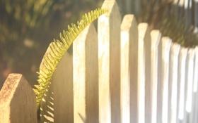 Обои листья, забор, растение, ветка