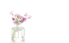Картинка свет, цветы, фон