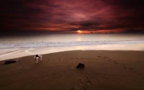 Обои море, пляж, закат, собака