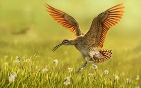 Картинка природа, птица, крылья, арт, трава