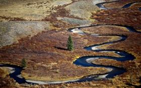 Картинка природа, река, дерево, равнина