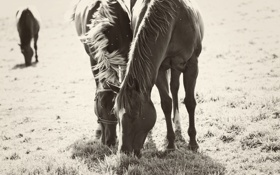 Обои стилизация, едят, лошадки