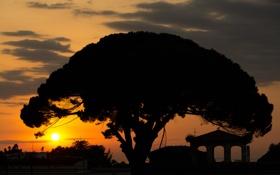 Картинка небо, солнце, облака, закат, дерево, силуэт, крона