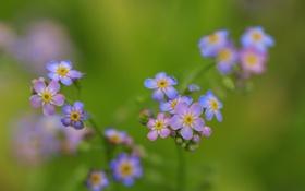 Картинка цветы, природа, растение, ветка, лепестки