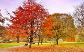 Картинка дорожка, скамья, деревья, небо, парк, осень