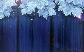 Обои иней, листья, снег