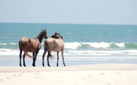 Картинка песок, берег, лошади