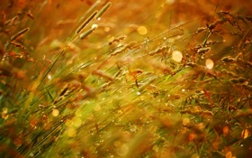 Картинка поле, лето, солнце, капли, закат, блики, боке