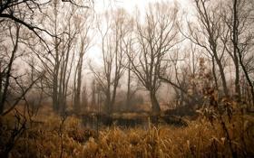 Картинка природа, лес, пруд, камыш