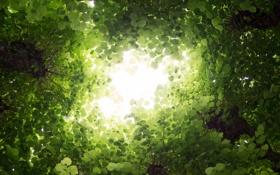 Картинка листья, деревья, природа