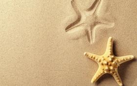 Обои песок, морская звезда, след