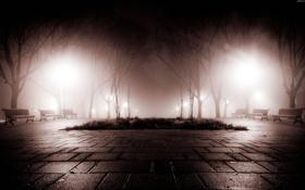 Картинка ночь, туман, парк