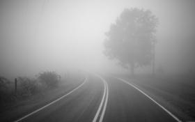 Картинка дорога, туман, дерево, поворот