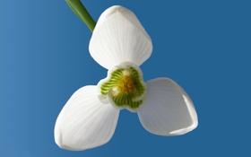 Обои белый, цветок, небо, макро, цветы, свежесть, синий